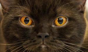 cat_585x350_645163a